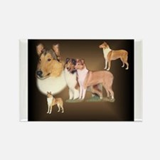 Rough and Smooth Collie Gifts Rectangle Magnet (10