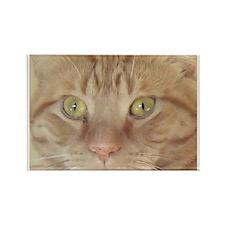 Orange Tabby Cat Rectangle Magnet