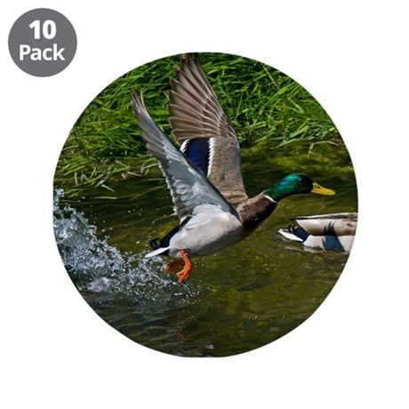 "Mallard Take-off 3.5"" Button (10 pack)"
