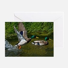 Mallard Take-off Greeting Card