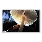 Mushroom Gills Backlit Rectangle Sticker