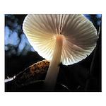 Mushroom Gills Backlit Small Poster