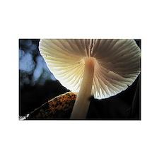 Mushroom Gills Backlit Rectangle Magnet