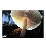 Mushroom Gills Backlit Postcards (Package of 8)