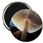 Mushroom Gills Backlit Magnet