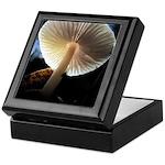 Mushroom Gills Backlit Keepsake Box