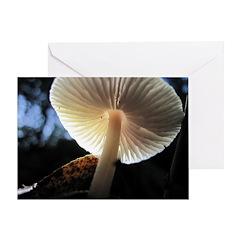 Mushroom Gills Backlit Greeting Card