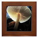 Mushroom Gills Backlit Framed Tile
