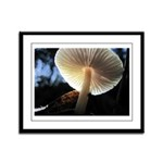 Mushroom Gills Backlit Framed Panel Print