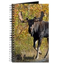 Bull walking Journal