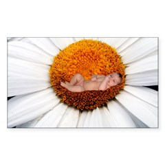 Daisy Flower Baby Rectangle Sticker