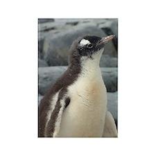 Baby Penguin Magnet