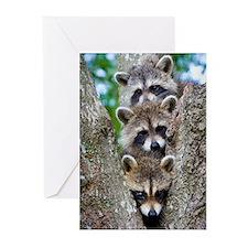 Baby Raccoon Trio Greeting Cards (Pk of 10)