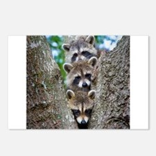Baby Raccoon Trio Postcards (Package of 8)