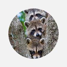 """Baby Raccoon Trio 3.5"""" Button"""