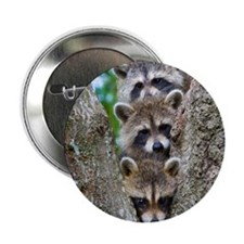 """Baby Raccoon Trio 2.25"""" Button (10 pack)"""