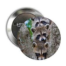 """Baby Raccoon Trio 2.25"""" Button"""
