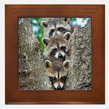 Baby Raccoon Trio Framed Tile