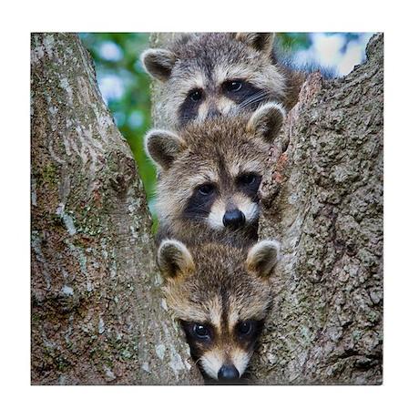 Baby Raccoon Trio Tile Coaster