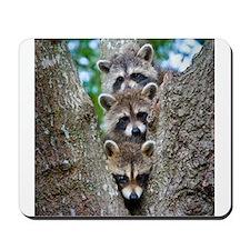 Baby Raccoon Trio Mousepad