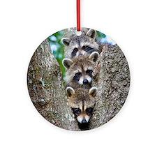 Baby Raccoon Trio Ornament (Round)