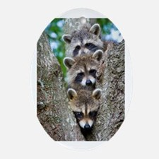 Baby Raccoon Trio Oval Ornament