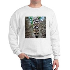 Baby Raccoon Trio Sweatshirt
