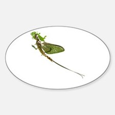 Green Drake Oval Decal