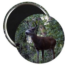 "Buck and Doe 2.25"" Magnet (10 pack)"