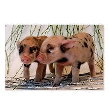 Unique Tea cup pigs Postcards (Package of 8)