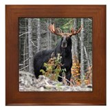 Moose in the wild Framed Tiles
