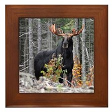 Marty Moose Framed Tile