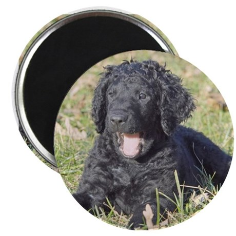 """Curly Pups Are Cuddly! 2.25"""" Magnet (10 pack"""