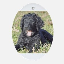 Cute Curly puppy - Ornament (Oval)