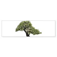 Bonsai Blossom Bumper Sticker (50 pk)