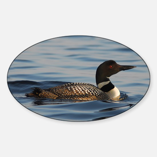 Common Loon Oval Decal