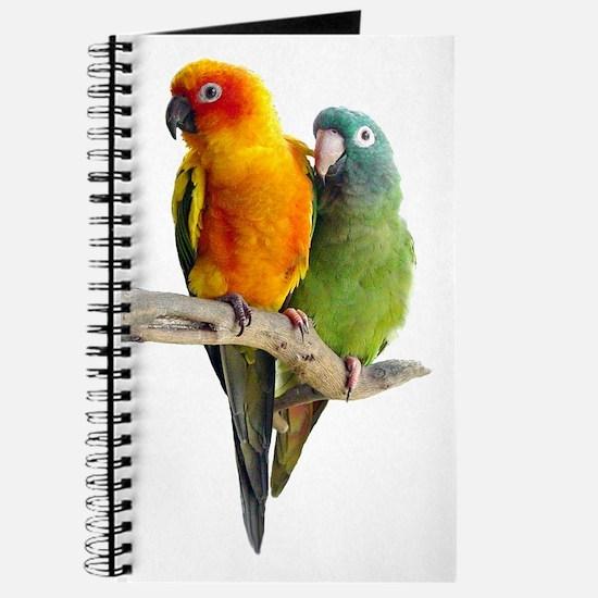 Sun Conure Journal