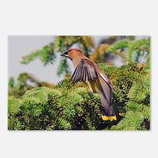 Cedar Waxwing Postcards (Package of 8)