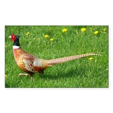 Ring-necked Pheasant Decal