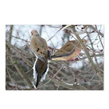 Mourning Doves Postcards (Package of 8)