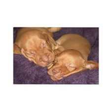 Cute Vizsla Puppies Rectangle Magnet