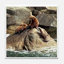Sea Lion Tile Coaster