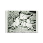 Helmet Pigeons Rectangle Magnet (10 pack)