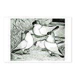 Helmet Pigeons Postcards (Package of 8)