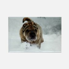 Snow Shar-Pei Rectangle Magnet (10 pack)