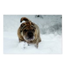 Snow Shar-Pei Postcards (Package of 8)