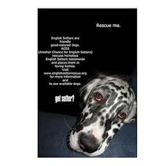 Got Setter? Postcards (Package of 8)