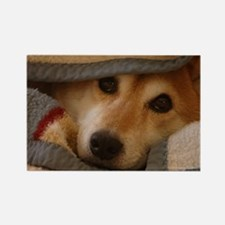 Shiba Inu in a Blanket Rectangle Magnet