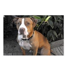 Pit Bull Memphis Postcards (Package of 8)