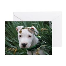 Pit Bull Joey Greeting Card